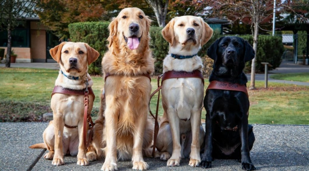 4 guide dogs